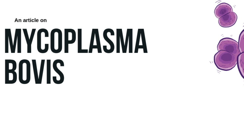 Mycoplasma bovis