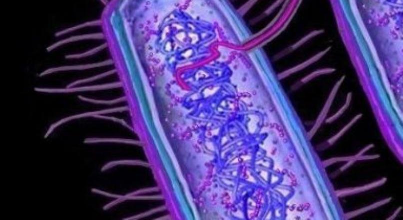 pili of bacteria