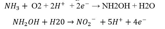 nitrifying equation